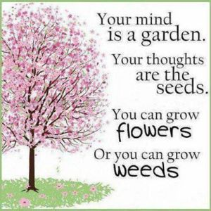 Your-mind-is-a-Garden